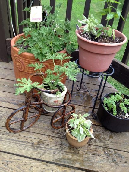 Potted Plant Corner