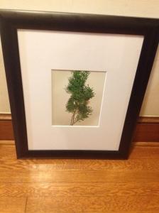 Cedar?