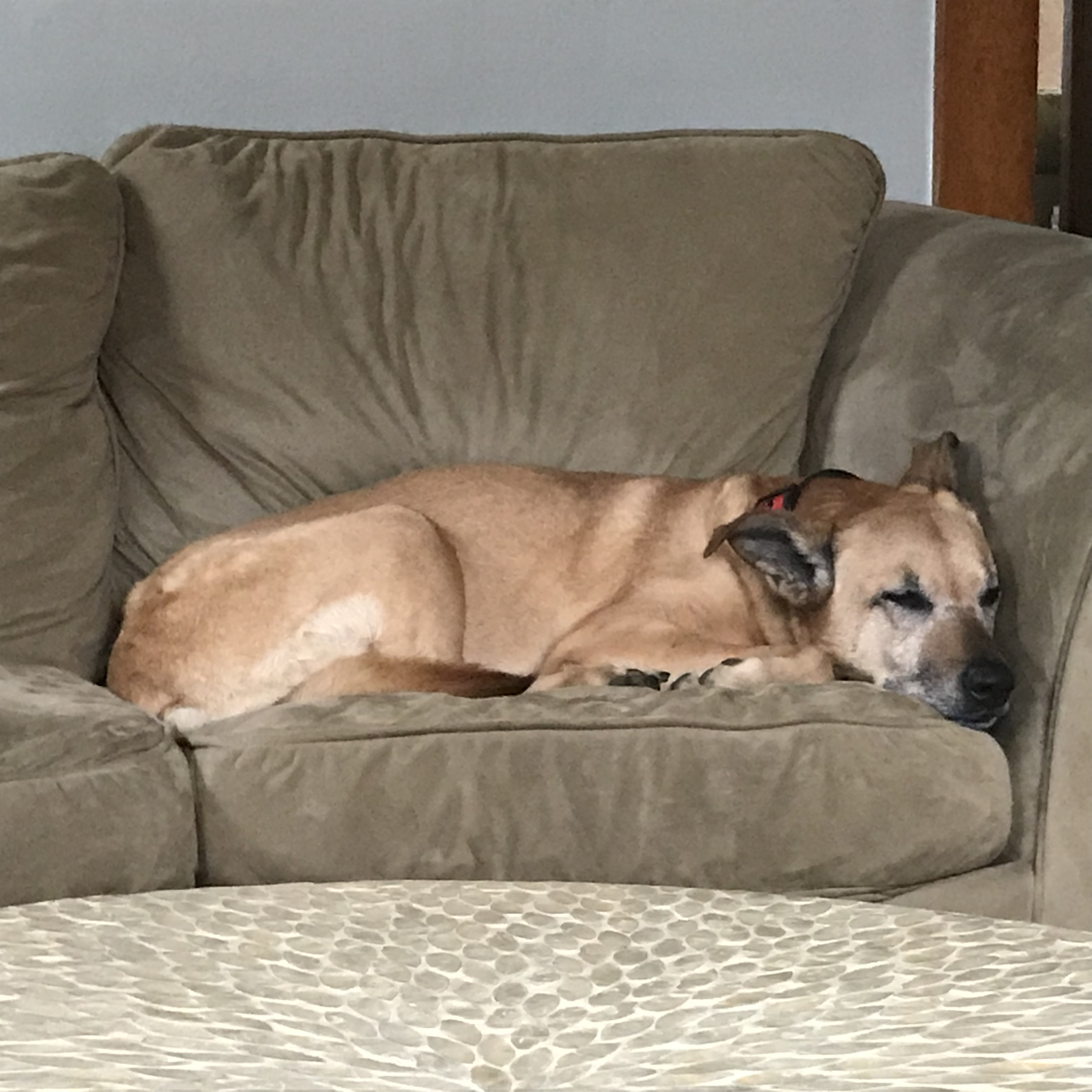 Cocoa on the couch